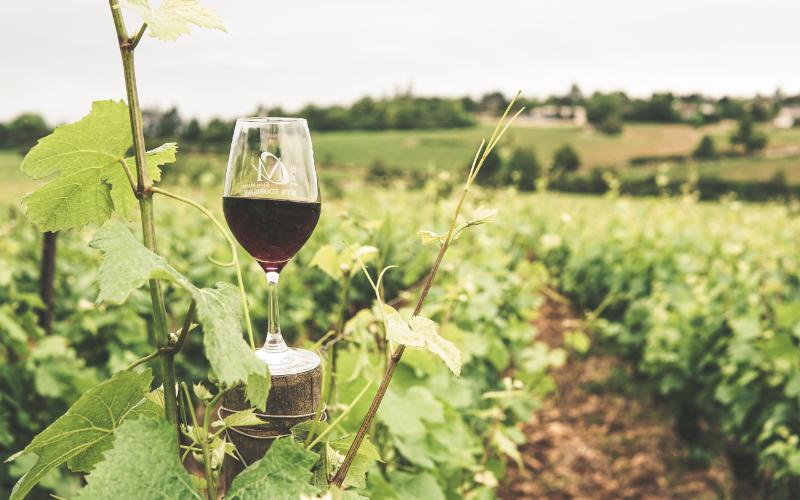 DISCOVERY STAY OF THE MEDOC VINEYARDS